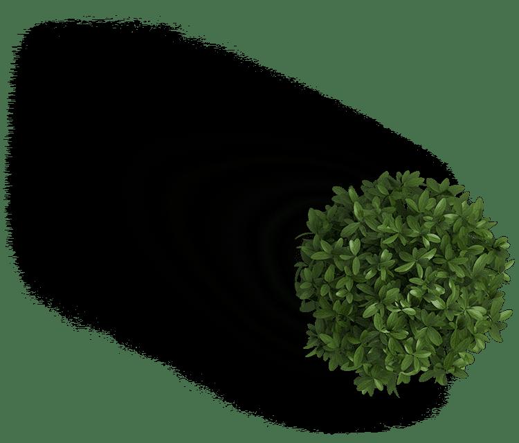Plant transparent